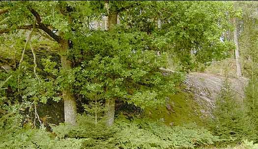 Skaraberget